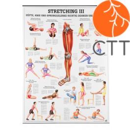 Stretching III, 70  x 100 cm, planche d´enseignement plastifié, en Allemand