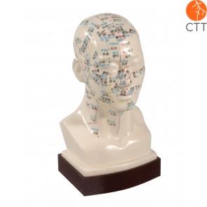 Modèle professionnelle de tête diamétre de 25 cm