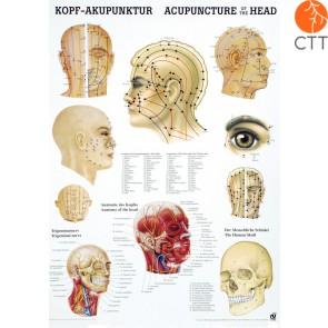 Acupuncture de la Tête planche d´enseignement, 50 x 70cm