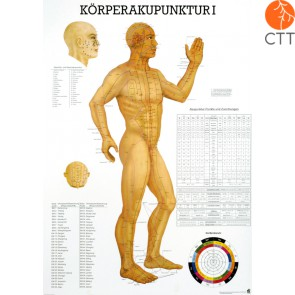 Poster (Anatomical Chart) Body acupuncture I