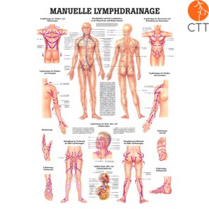 blackboard manual lymphatic drainage, in German, plastified, 70x100cm