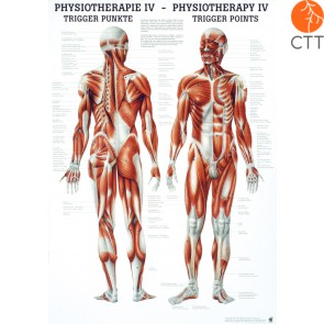 Poster Physiotherapy IV - THE TRIGGER POINTS, 50 x 70cm, German and English, paper with fine metal bars