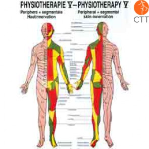 Poster Physiotherapy V, 50 x 70 cm, peripheral and segmental skin innervation, with fine metal bar on top and bottom