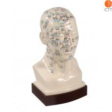 Professional acupuncture head model, 21cm