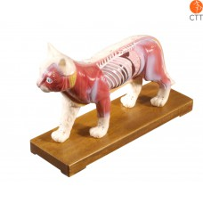 Professional model cat with acupuncture points, hard plastic with base