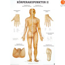 Poster (Anatomical Chart) Body acupuncture II