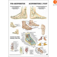 Poster Body acupuncture