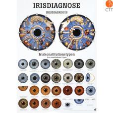 Poster (Anatomical Chart) Eye, 50 70cm in German