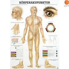 Poster, Body acupuncture, Anatomical Chart 70 x 100cm